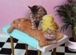 massaggio_gatti